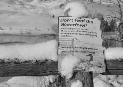 Don't Feed the Waterfowl!