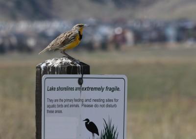 Bird on a Sign