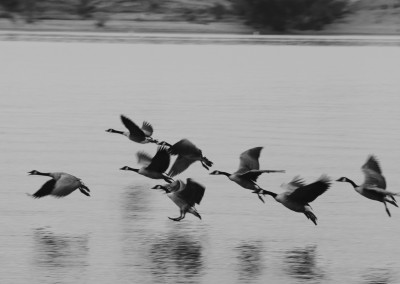 Flying Geese at Chatfield