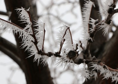 Ice on a Branch 2